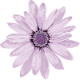 flower-1151970_960_720_smaller.png