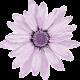 flower-1151970_960_720_smaller.png