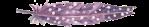 separator purple feather